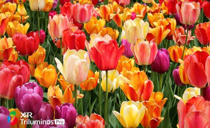Una amplia gama de llamativos colores naturales